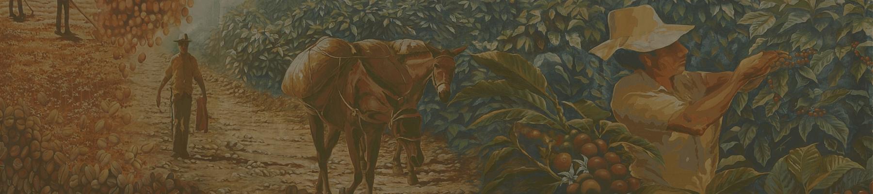 Colombian donkeys